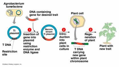 "an analysis of the pros and cons of cloning a process of creation of one organism from anothers dna I will delete any ""anti-semitic"" comments to make it cloning would allow for 100% transfer of it is a non-anthropomorphic process however."